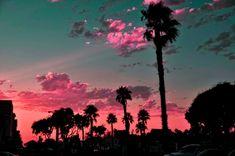 pink flamingo sky