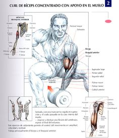 Ejercicios Biceps: Curl de biceps concentrado con apoyo en el muslo by raul391970, via Flickr tags, guns, fitness, curls, ejercicios biceps