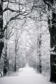 l'hiver dans le bois