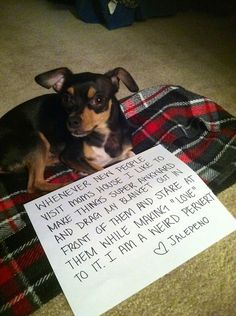 Dog-shaming.