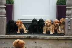 puppies, anim, dogs, funny pictures, family photos, dog pictures, families, famili photo, friend