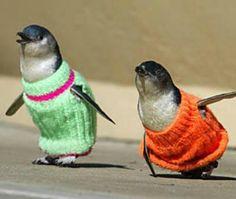 penguin sweaters!