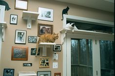 Cat Wall Shelves. She used simple wooden shelves with trim and decorative braces to create sturdy and attractive shelves. Paint everything white and add some carpet on top and you've got a beautiful, cat-friendly wall element. I also like the wall pictures :)