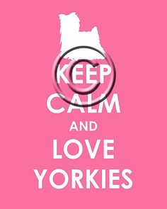 love my yorkie