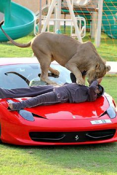 "Ferrari 458 ""Lion Edition"""