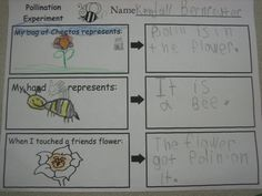 How orange Cheeto hands can help you learn about pollination! Great activity!