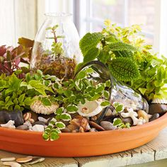Tabletop Saucer Garden | Lowe's Creative Idea...  Want a great way to exercise your green thumb during the winter months? Think outside the box with an indoor mini garden planted in a terra-cotta saucer.