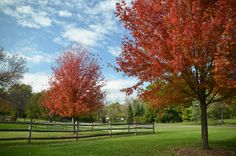 Autumn Colors at Cantigny Park Photo By Michael Kappel