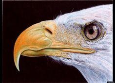 Artist Samuel Silva's Incredible Photorealistic Ballpoint Pen Drawings (PHOTOS)