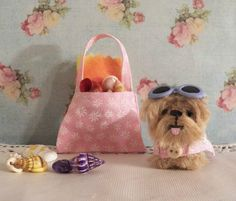 miniature Yorkie going to the beach! With sunglasses, beach towel, suntan lotion and collecting miniature sea shells