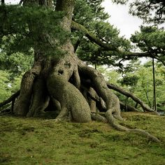 pines, hiding places, tree trunks, fairi, trees, hous, beauty, kid, the roots
