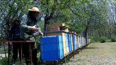 Csernavölgyi Méhészet
