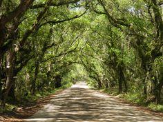 Southern lowcountry lane