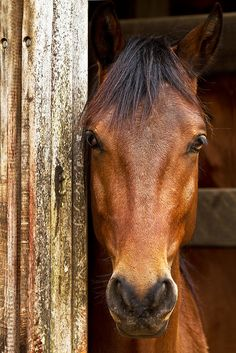 Sweet eyes by Raphael Macek - Horse Photography on flickr