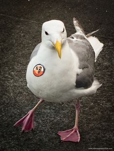 Even seagulls are fans of our HootSuite pins!