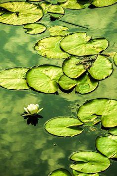 Green #Mikyajy