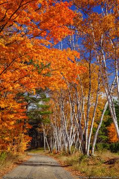 Fall Foliage on Country Road, central Maine