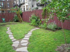 Rupturewort: a grass alternative. Drought tolerant and can handle foot traffic