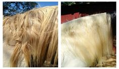 Mane-ly Long Hair - product for treating tails and manes and eliminating snags.
