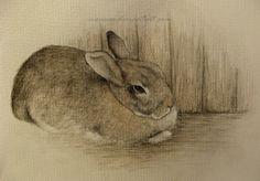 Rabbit on the Floor by Maija Laaksonen (moussee.deviantart.com) @deviantART