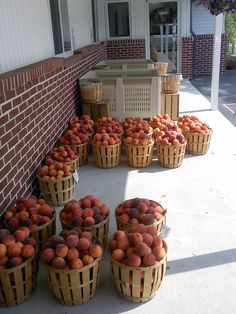 Peaches, at the local orchard.....Christiana, PA.....Southern Lancaster County