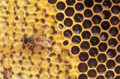 La miel: un alimento muy saludable. Clic en la imagen para ver el artículo.