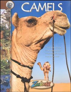 Camels - Zoobooks at theBIGzoo.com, an animal-themed store established in August 2000.