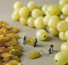 How grapes are made. [slinkachu]