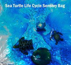 Sea Turtle Sensory Bag for Life Cycle Explorations