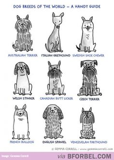 Handy Guide Of 9 Dog Breeds Of The World…