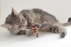 Safari Catnip Toy Tutorial