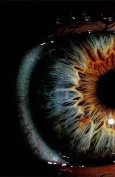 Universe of the eye...
