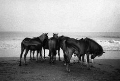 Wild horses couldn't keep me away... #animals #horses