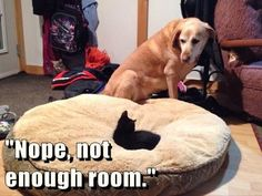 funny animals, funny dogs, funny animal pictures, animal funnies, funny cats