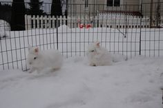 Where Does the Snow End and the Bunny Begin?