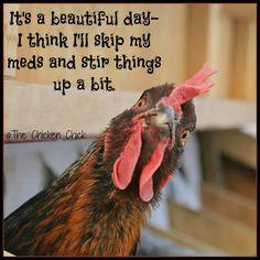 chicken, stir thing, funni stuff, funni anim, laugh, funni thing, anim quot, beauti, humor