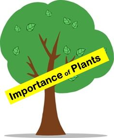 Importance of Plants  Lesson for kids
