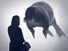 Bassin by Rainer Hamburg; http://flic.kr/p/f5PwjR #Walrus