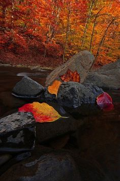 12 Ways To Capture The Colors Of Fall | DPS