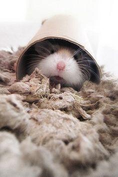 Hamster ² <3