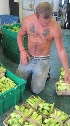 Farm Kings - Tim King omg I love him more!!!!!