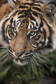 ☀Graceful ~ San Diego Zoo**