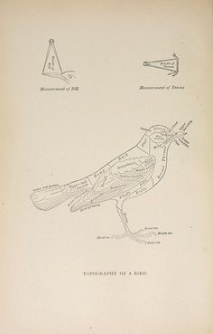 Topography of a Bird from Handbook of birds of the western United States, 1902