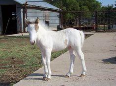 Lindsay Clayton's 2-month-old miniature horse, Jet.