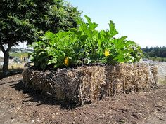 Bale Straw Gardening