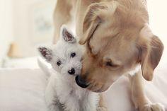 doggies. ♡