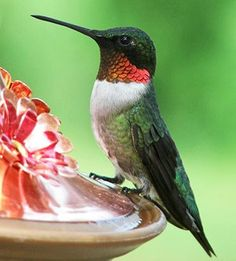 hummingbird (courtesy of @Emelinanjl133 )