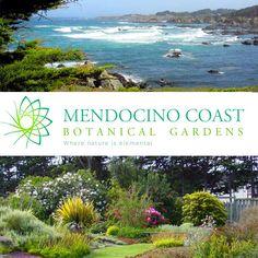 California botanical gardens arboretums on pinterest - Mendocino coast botanical gardens ...
