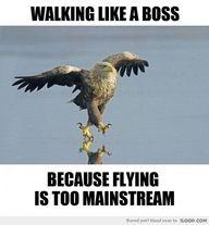 like a boss, hipsters, walks, laugh, giggl, funni, hawks, humor, eagles