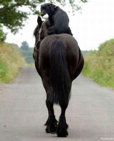 dog-on-horse.jpg (500×617)